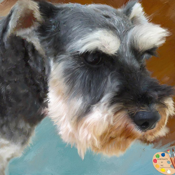 What do you think of our new  Schnauzer Dog Por... ? http://portraits-by-nc.com/products/schnauzer-dog-portrait-323?utm_campaign=social_autopilot&utm_source=pin&utm_medium=pin - Give it some love and help us share :)