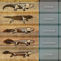 Great Transitions Interactive:  The fossils of transitional creatures were key evidence for Darwin's evolutionary theory, but none had been found when he published On the Origin of Species. Now, there are many examples of such fossils, which clearly show that big evolutionary leaps consist of many smaller steps.