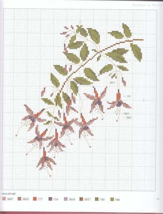 erbario 24 - fucsia magellanica
