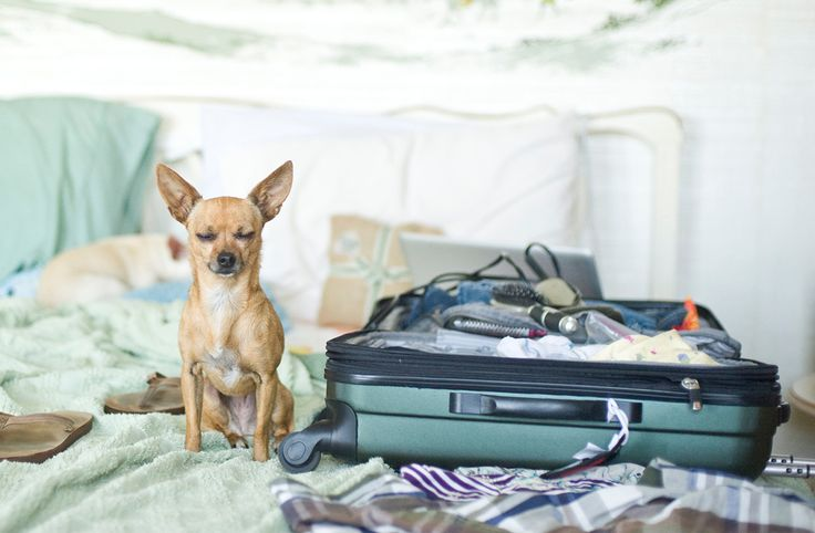Complete Guide to Roadtripping With Your Pooch - before you leave you must double check what you had packed for fido.