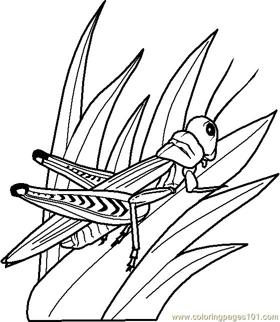 Grasshopper Coloring Page 0002 2