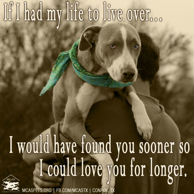 For all the parents of rescued fur babies ♥