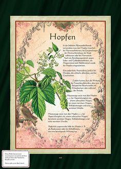 Hopfen - Hopfentee