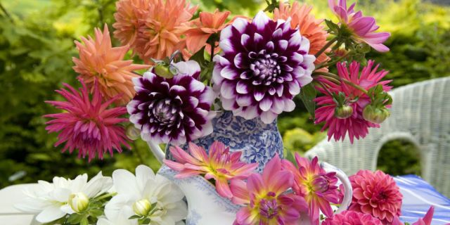 Blooming All Summer Months - The Most Popular Flowers for Each Month in Summer - CountryLiving.com