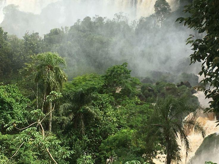 Iguacu jungle
