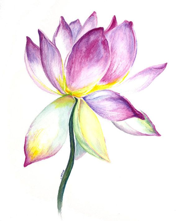 Lotus Flower Watercolor Painting by CountryRoadsStudio on Etsy, $10.00