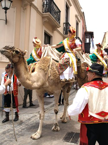 At the Romería de San Isidro Labrador and Santa María de La Cabeza in La Orotava, the procession is led by the fiesta queens atop camels.