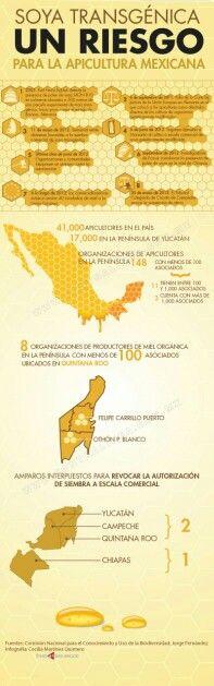 Soya transgénica, riesgo para la apicultura mexicana.