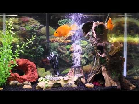1hr relaxing music Aquarium Screensaver Fishtank HD - YouTube