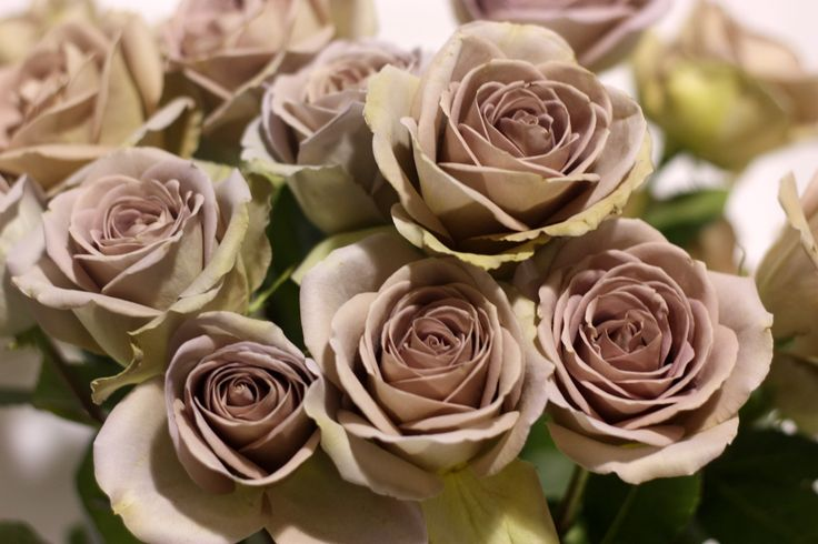 amnesia rose wedding bouquet - Google Search