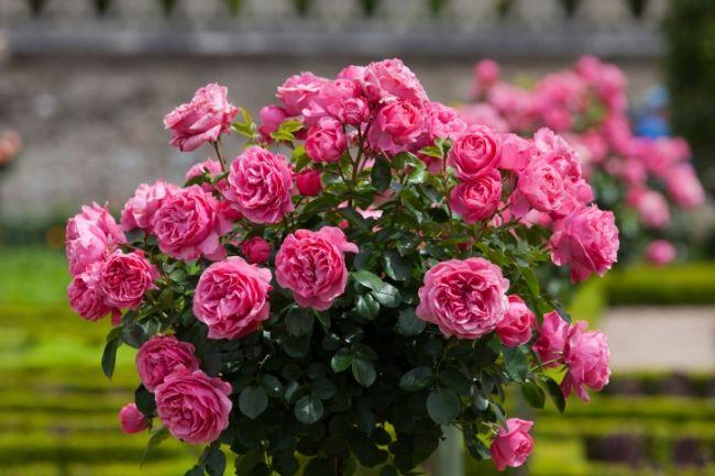 15 efecte speciale pentru grădină de flori. Discuție privind te gratuit acum! - Serviciul rus jurnal online