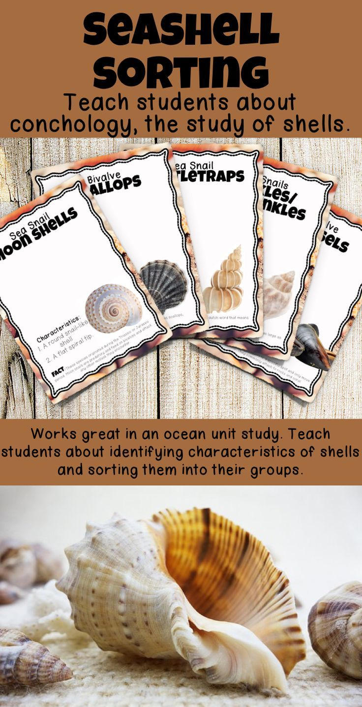 Help Your Students Learn About Shells From Mollusks As They Sort And Classify Sea Shells Use These 16 Beautiful An Study Unit Ocean Unit Ocean Theme Preschool [ 1437 x 736 Pixel ]