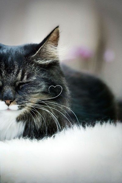 #cat #heart #whiskers