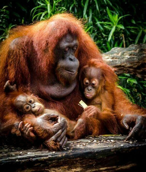 Familia changos | Animales | Cute animals, Animals y ...
