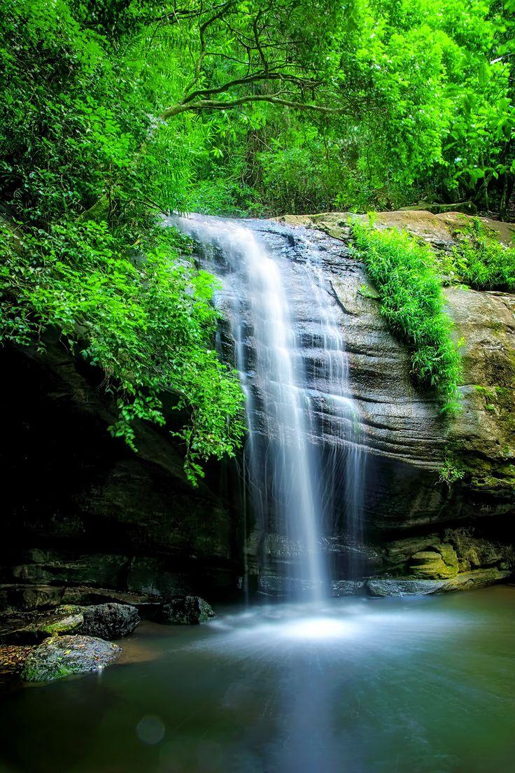 Serenity Green - Serenity Falls in Buderim on the Sunshine Coast hinterland in Queensland Australia