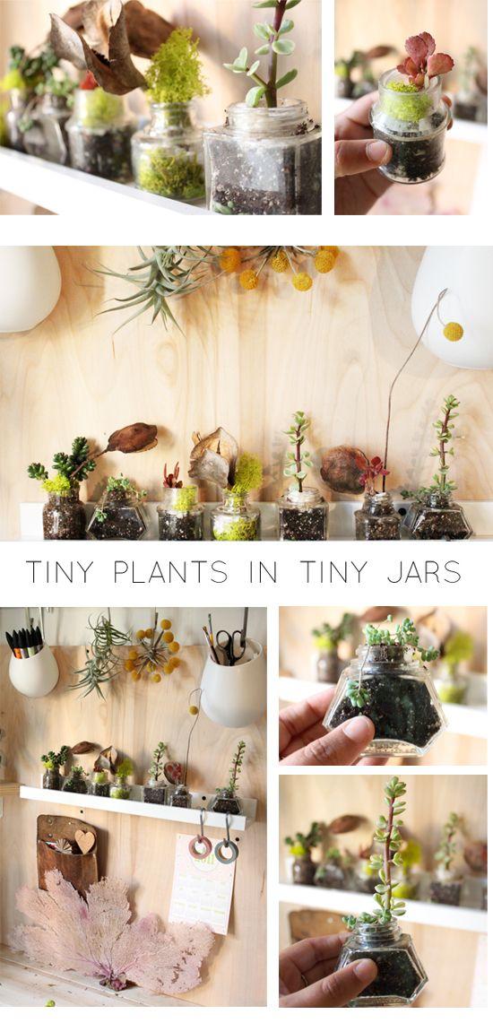 Tiny plants in tiny jars