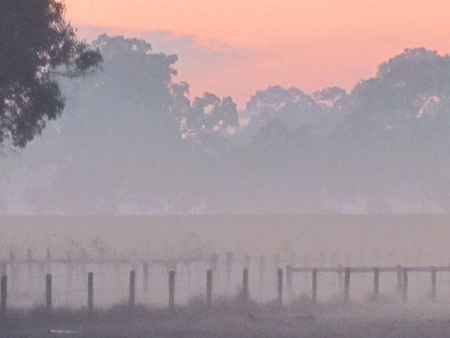 Misty morning at Penola vineyard, SA