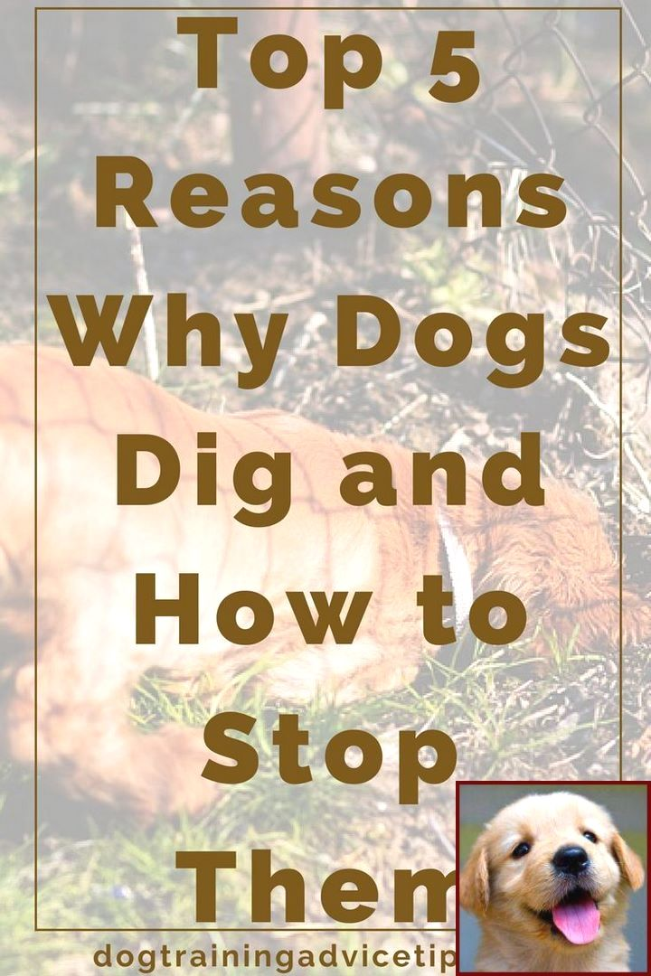1 Have Dog Behavior Problems Learn About House Training A Staffy