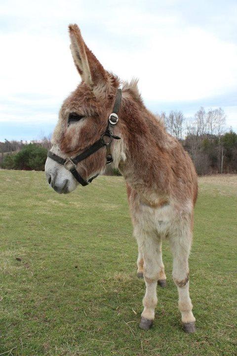 Just love those donkeys! Here's Josie