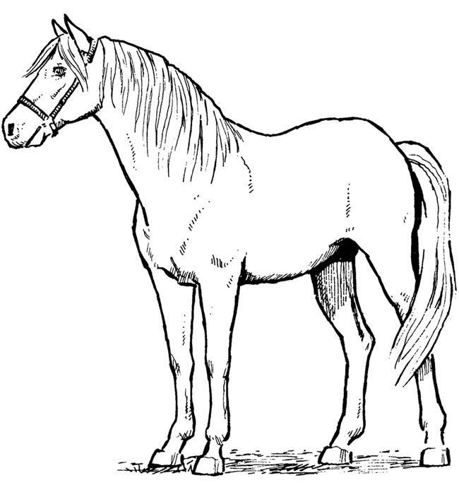standing-horse-drawing-3.jpg