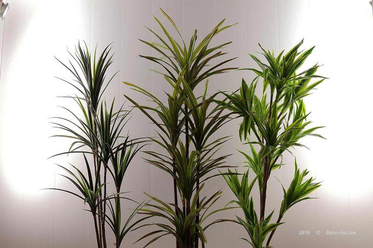 Драцена пальма 175см.