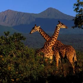 National geographic Tanzania's Great Migration- $8145 When I win Lotto!