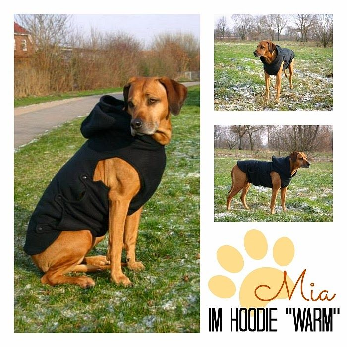photokraphy: *Free-Book* Hundehoodie