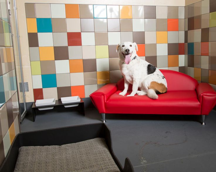 The Pooch Hotel is a hotel for dogs that really understands an owner's dilemma of leaving Fluffers behind. Already anticipating that you'll miss your dog, the Pooch Hotel has around-the-clock webcam access, so you can check in on your dog as often as you want. With different locations in six states, business is booming for the Pooch Hotel.