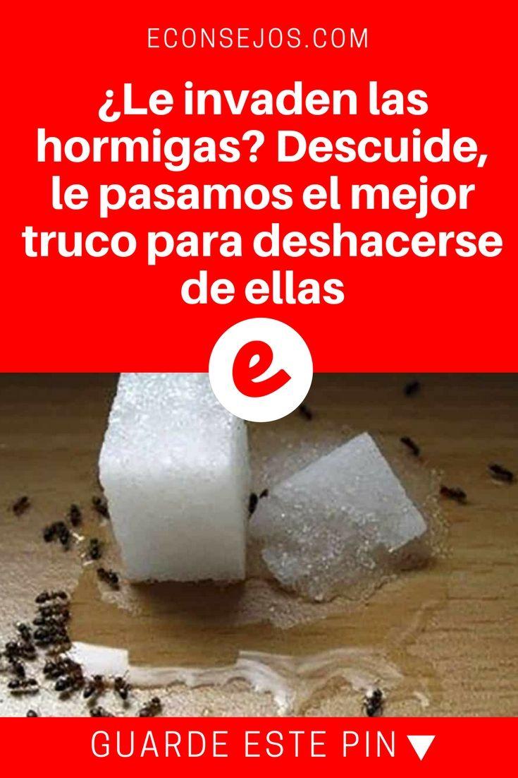 Eliminar hormigas en casa | ¿Le invaden las hormigas? Descuide, le pasamos el mejor truco para deshacerse de ellas | ¡Es muy simple y económico! Sepa todo dando click a la foto.