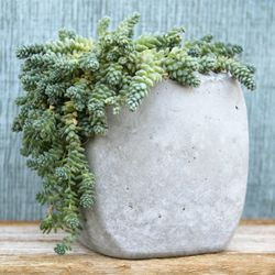 Container Gardening has never been more fun and rewarding with these DIY concrete planters! #craftgawker