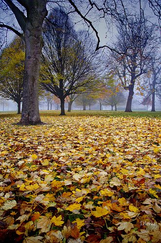 Fall colors in Hyde Park, London