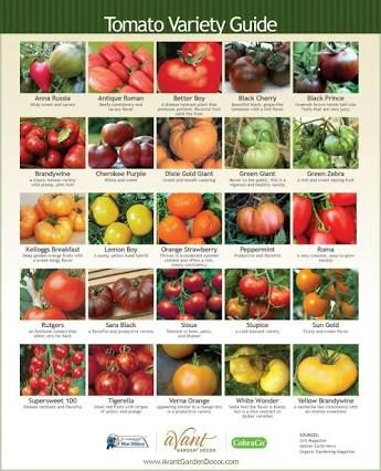 types of tomato - Google Search