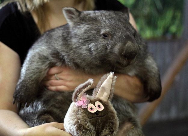"""""""Dammit I've got so much to do before then though.""""   21 Wombats Who Understand The Struggle Of Constant Tiredness"""