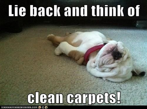 Everybody love a clean carpet!