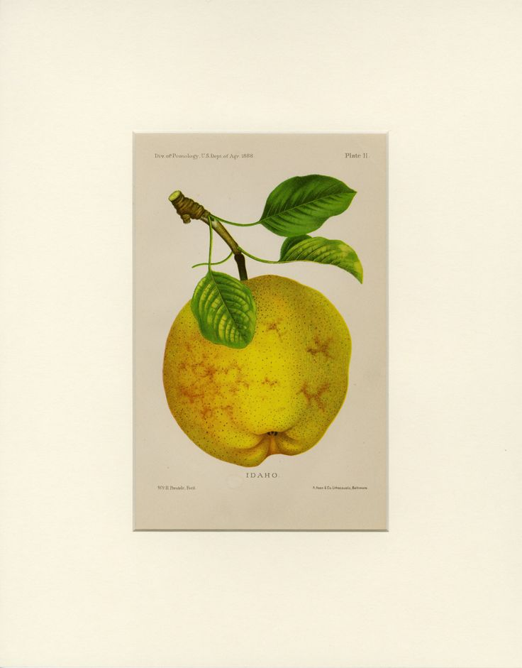 37 best Fruit Botanicals, Vintage Art Prints images on Pinterest ...