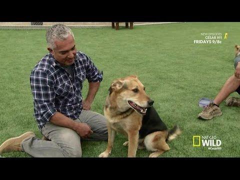 Dog Whisperer with Cesar Millan | Season 9 Episode 3 | Cesar Conquers London | Full Episod - YouTube