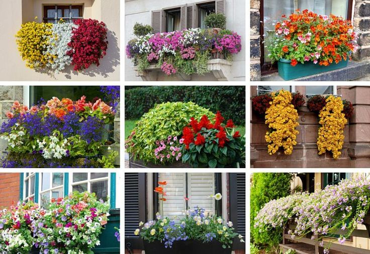 Nothing dresses up a window or balcony like flower boxes. Check out these 40 stunning flower and balcony flower box arrangements.