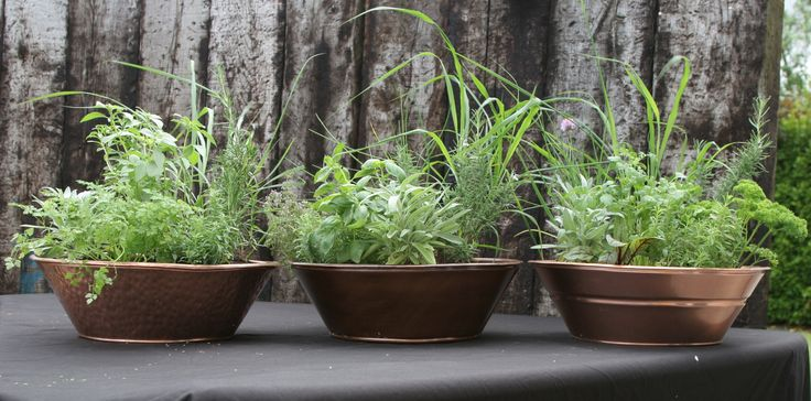 Copper planters with herbs from co wexford