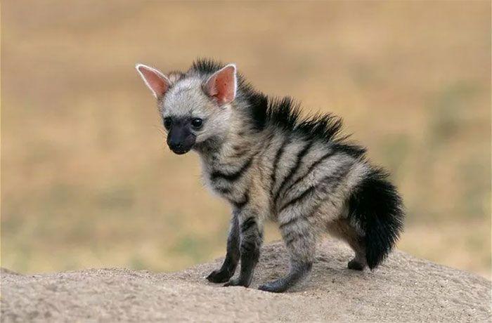 Meet The Cutest Animal You've Never Heard Of