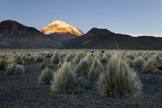 Sajamský park se nachází na rozsáhlé náhorní plošině v nadmořské výšce kolem 4 000 m n.m. Altiplano (šp. náhorní rovina) odděluje západní a východní Andy. Po Tibetské plošině je nejrozsáhlejší na Zemi