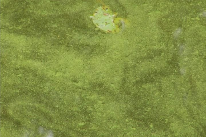 Houghton Lake Residents Concerned Regarding Algae Contaminated W - Northern Michigan's News Leader