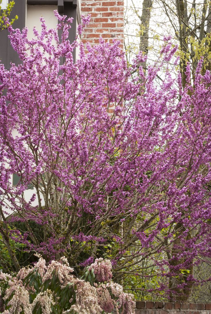 42 Best Small Trees For Small Spaces Images On Pinterest 400 x 300