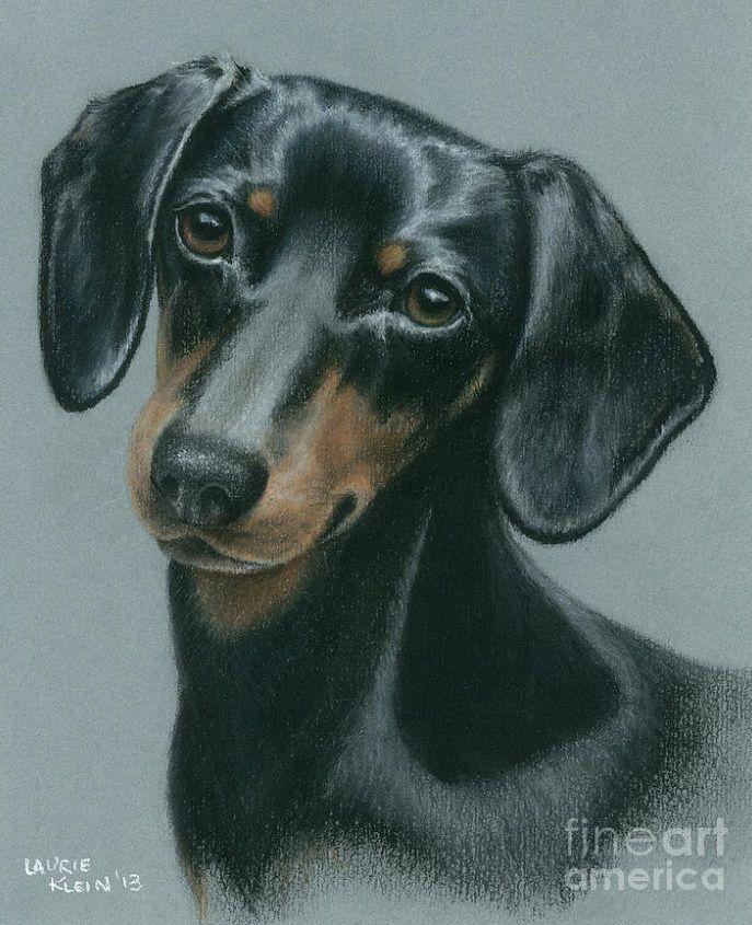 рисунки такса собака ботанической живописи