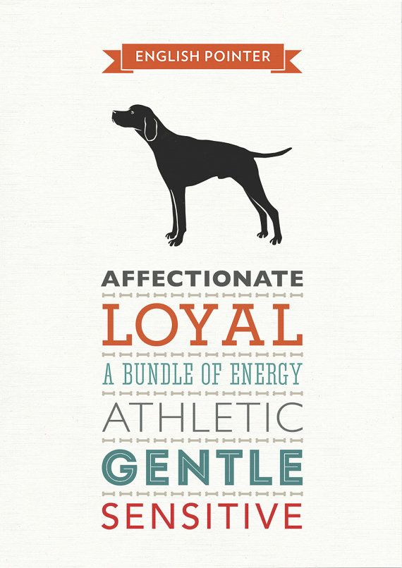 English Pointer Dog Breed Traits Print English by WellBredDesign
