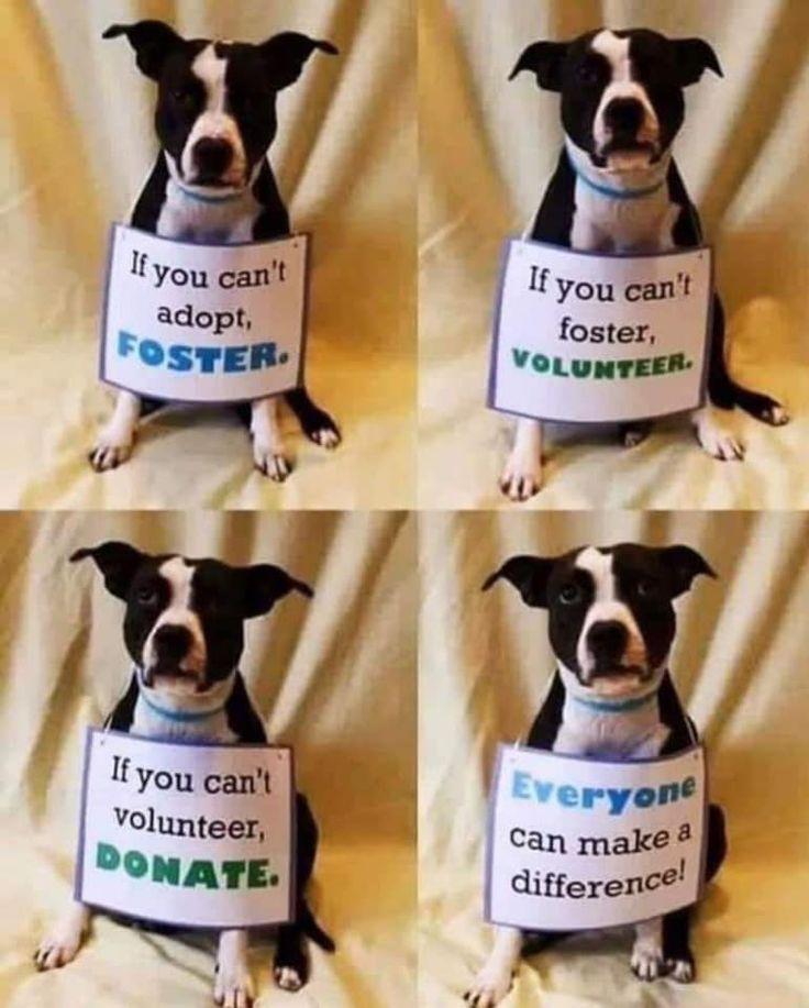 Where To Buy Help homeless pets, Homeless pets, Food animals