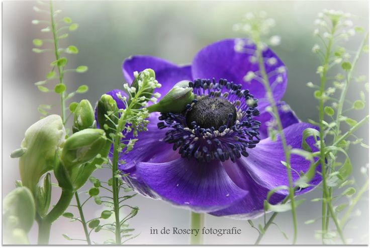anemonen spa school