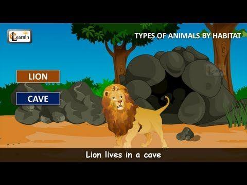 Habitat of animals | Animals video for kid | Kindergarten learning videos playlist