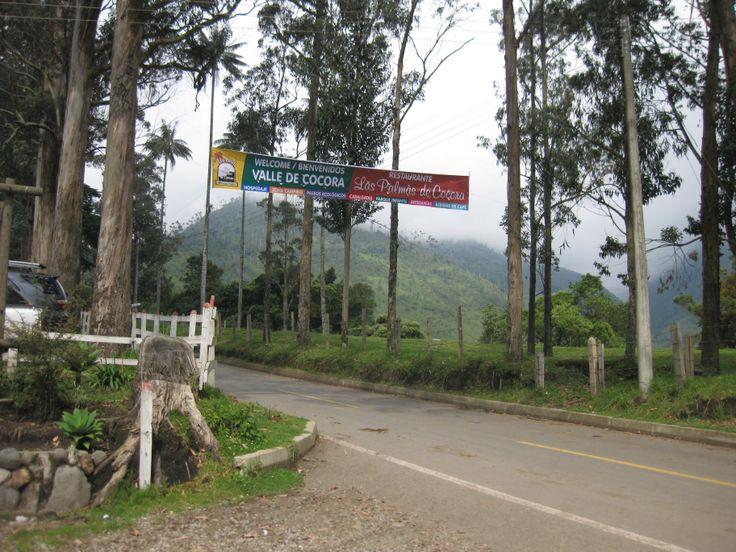 Valle De Cocora  Quindio, Colombia
