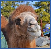 Popcorn park zoo animal rescue