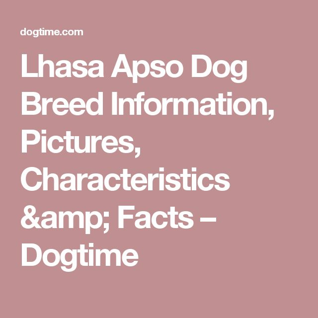 Lhasa Apso Dog Breed Information, Pictures, Characteristics & Facts – Dogtime